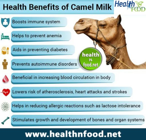 Camel Milk Benefits Infographic
