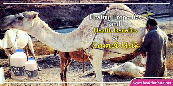 Health Benefits of Drinking Camel Milk